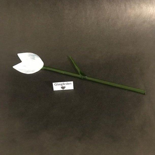 Blomst/tulipan til potte