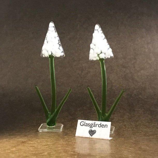 Hyacint (hvid) på fod