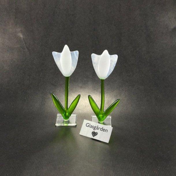 Tulipan på fod, hvid