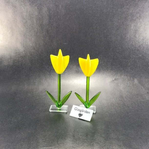 Tulipan på fod, gul
