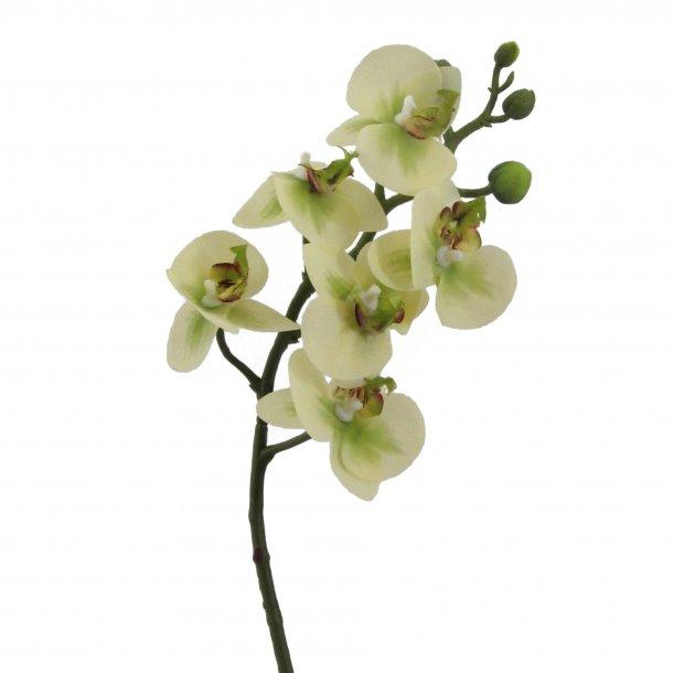 Orkidee grøn
