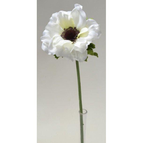 Anemone hvid