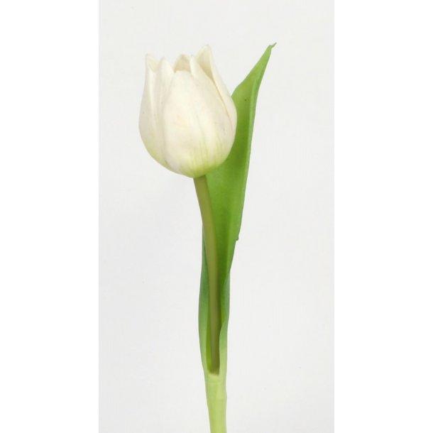 Tulipan hvid