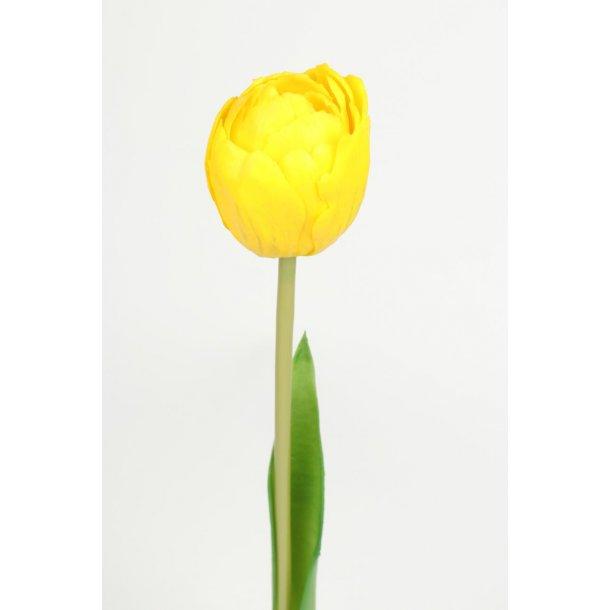 Tulipan gul