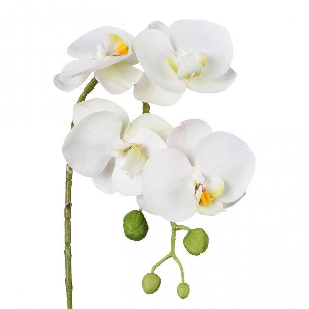 Orkide hvid