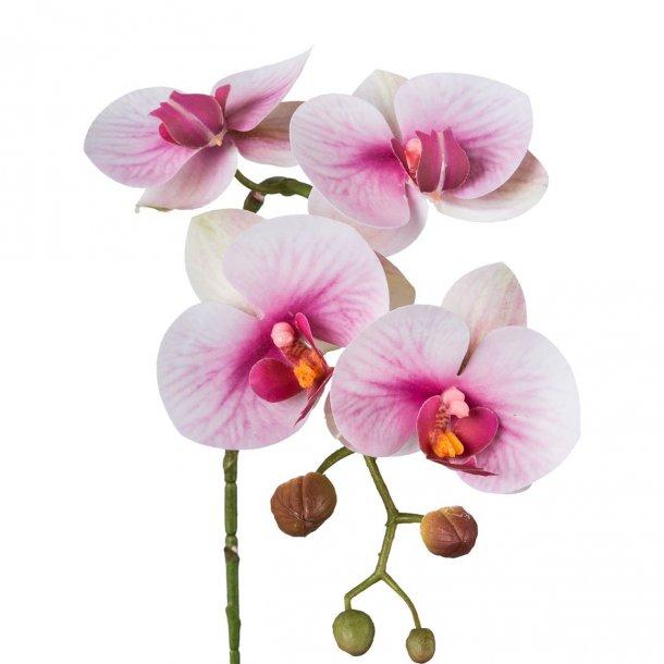 Orkide hvid/lilla