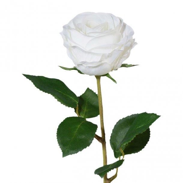 Rose hvid