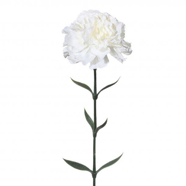 Nelke hvid