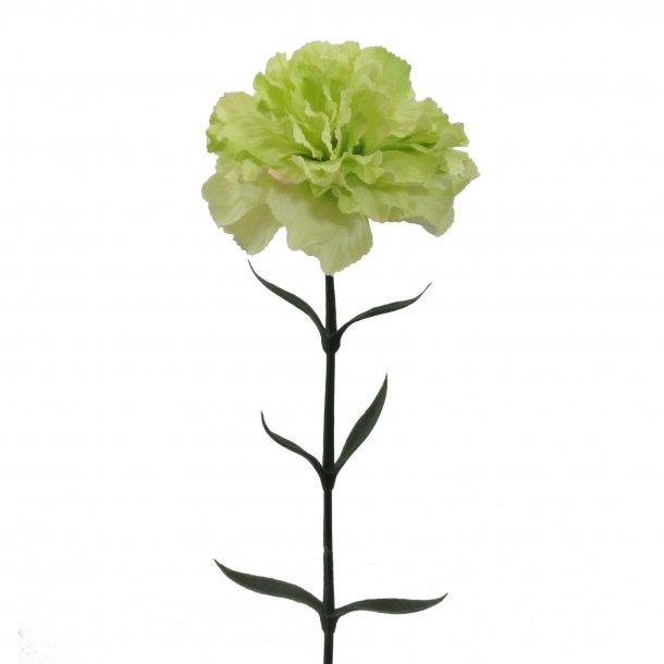 Nelke grøn