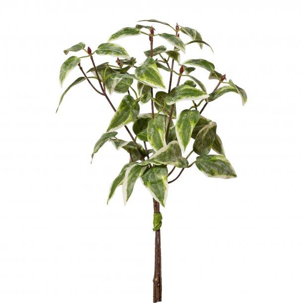 Busk grøn-hvid