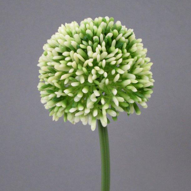 Allium lime