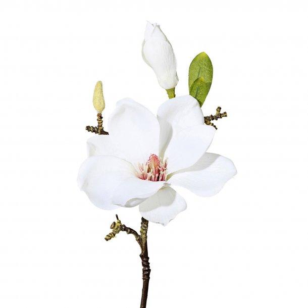 Magnolie gren hvid