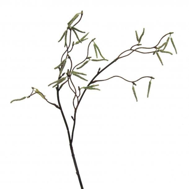 Birke gren