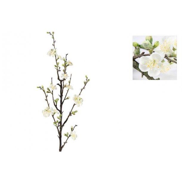 Kirsebær gren hvid