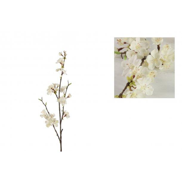 Kirsebærgren hvid
