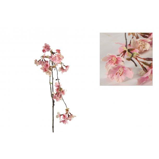Kirsebærgren rosa hænge