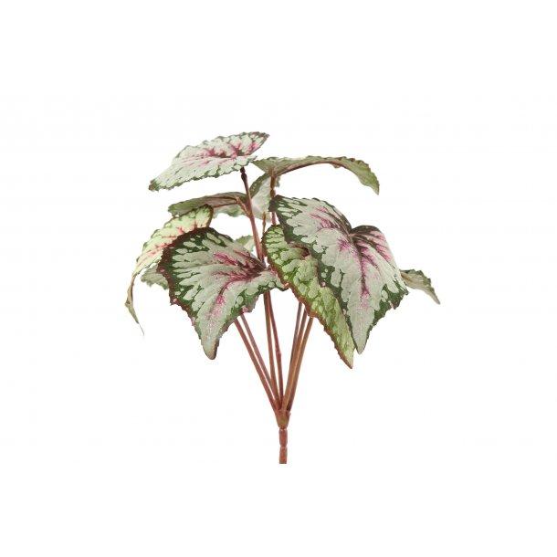 Begonia grøn rød 25 cm