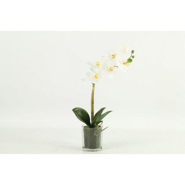 Orkide hvid i potte