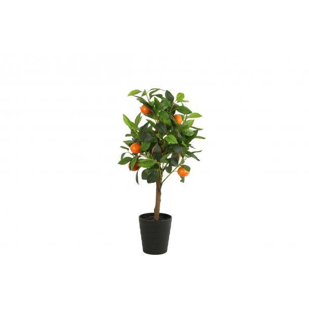 Citrus orange træ