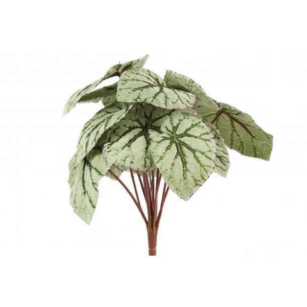 Begonia grøn rød 34 cm