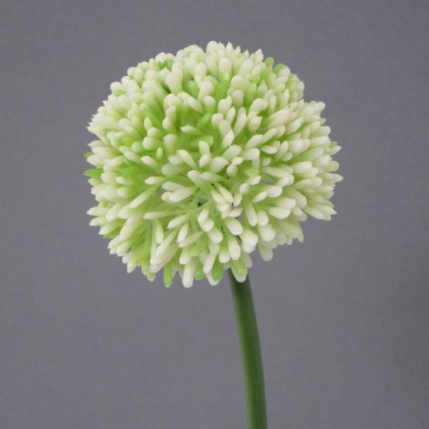 Allium hvid