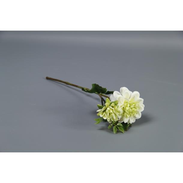 Dahlia hvid